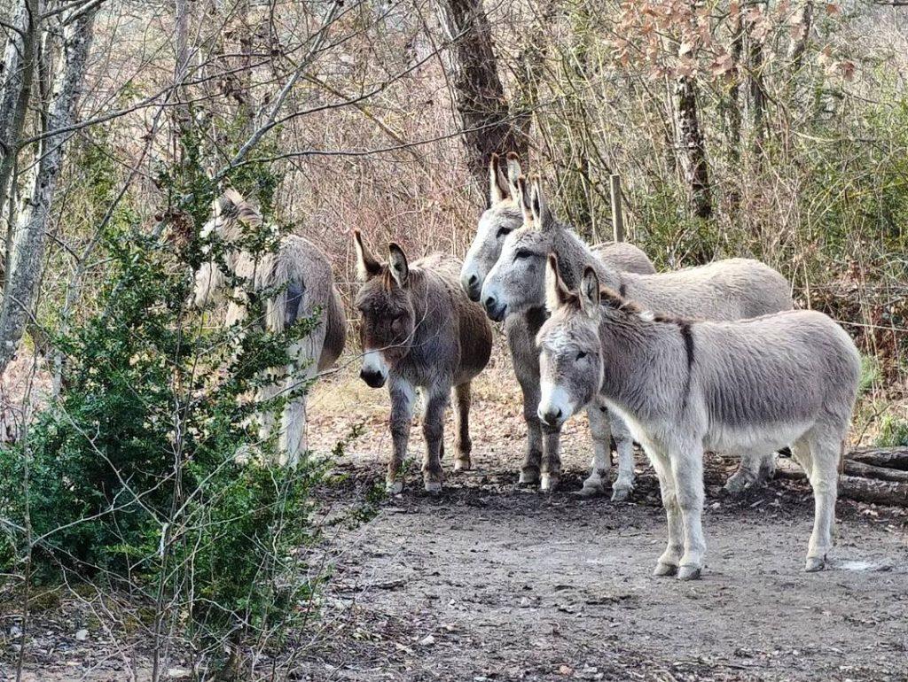 Les ânes de la ferme